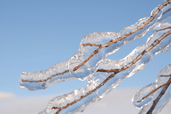 Ice on tree limbs